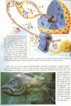 Evrim Anoforu Üzerine Bir Tedkik