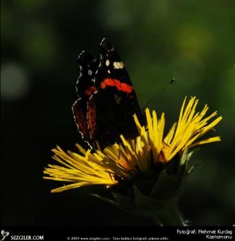 Çiçek ve kelebek 2 kastamonu mehmet kurdaş